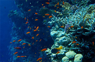 Дайвинг на Красном море