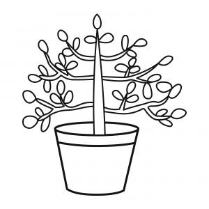 Клуб «Денежное дерево»