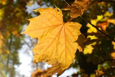 Поздравляем с началом осени!