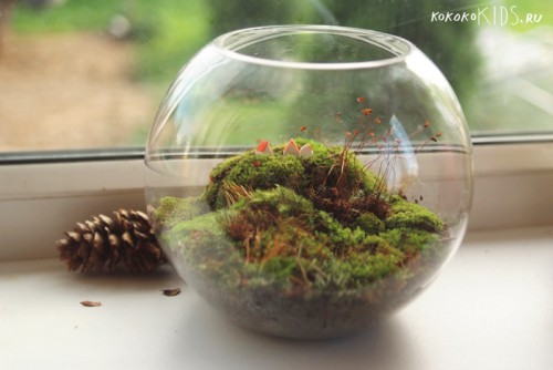 Террариум: лес