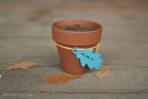 А ещё жёлуди можно посадить!