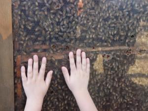Дети и пчелы