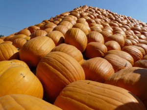 Ярмарка тыкв на Хэллоуин (Pumpkin Patch)