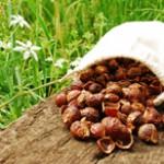 Выбираем экологически чистые моющие средства: чем хороши мыльные орехи?